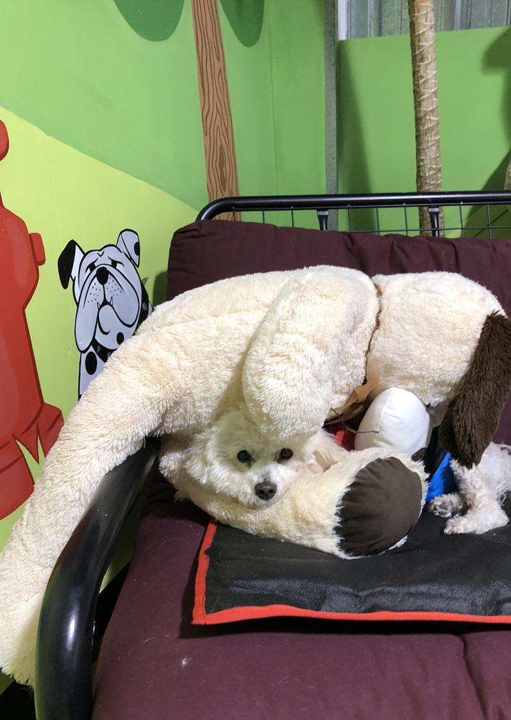Dog day care kapiti
