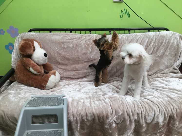 Dog daycare Kapiti