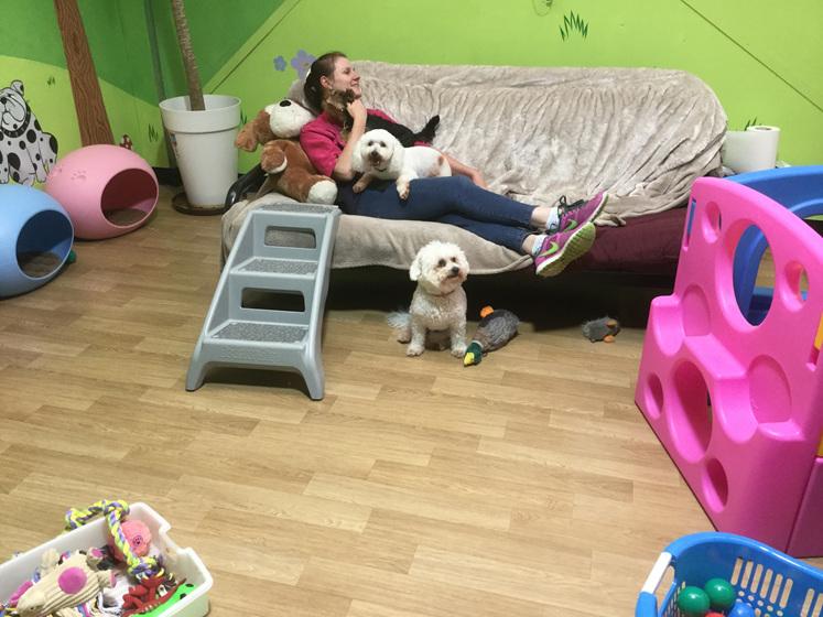 Dog daycare paraparaumu