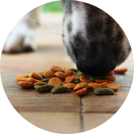 Dog Food ( Dry & Canned)