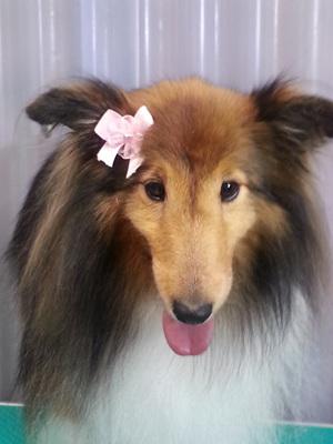 dog groomers kapiti