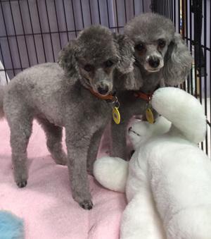 Dog mad groomers kapiti