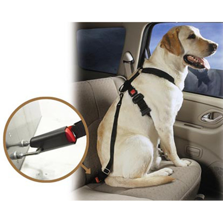 Dog Seat Belts - keep your hound safe