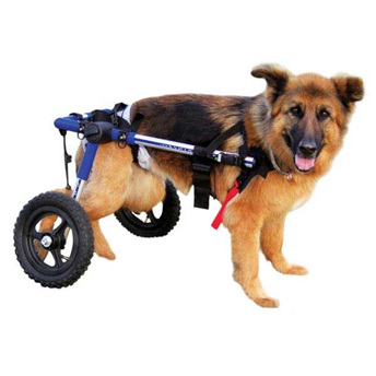 Walkin Wheels Dog Wheelchairs
