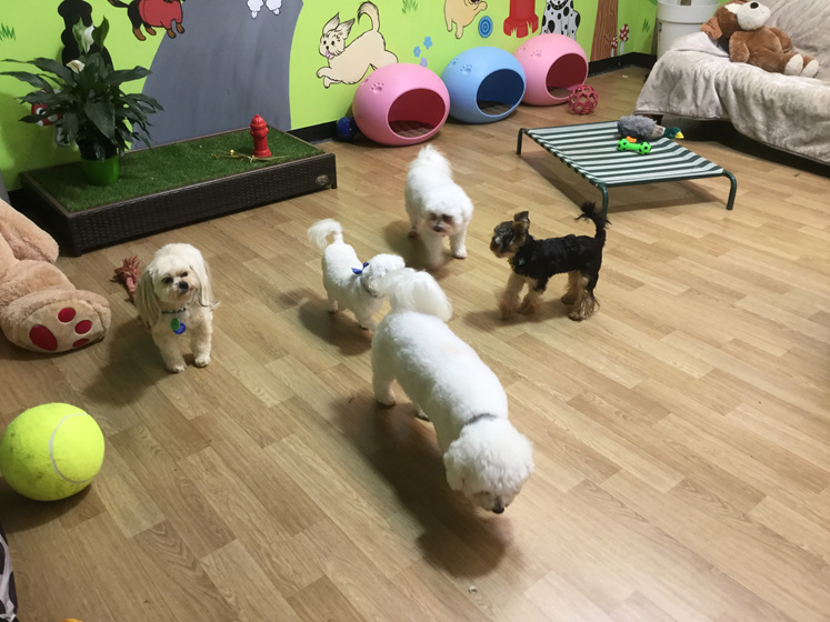 Doggy daycare kapiti