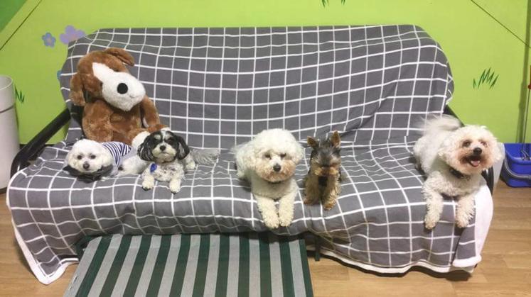 Doggy daycare paraparaumu