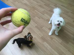 Doggy daycare rimu road