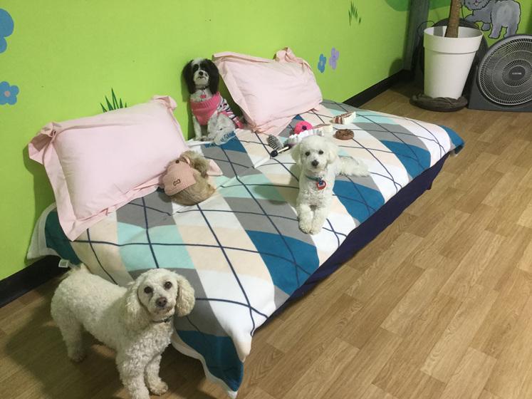 Doggy daycare waikanae