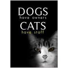 Dogs Cats Fridge Magnet