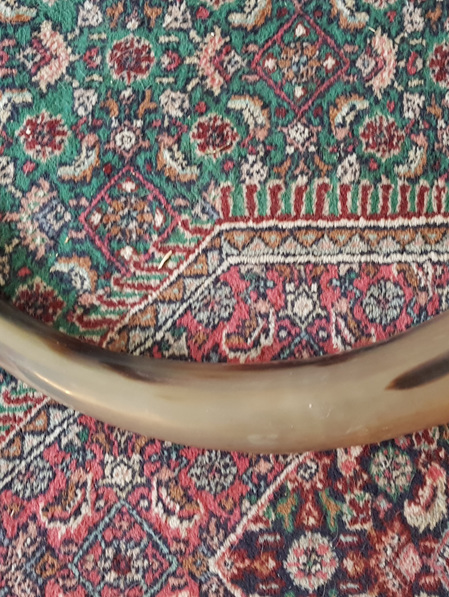 Drinking Horn Type 4A - Extra  Large  Plain Horn