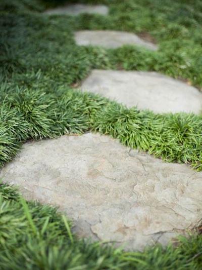 Dwarf Mondo Grass - Bulk Purchase (10 plants) FREE Postage