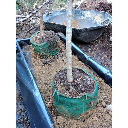 EG Treebags