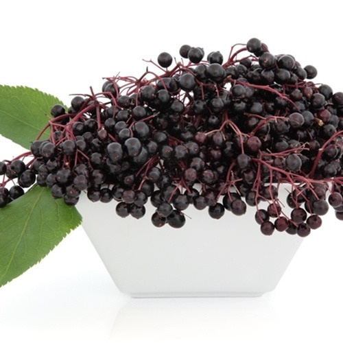 ElderBerry Flavour Concentrate