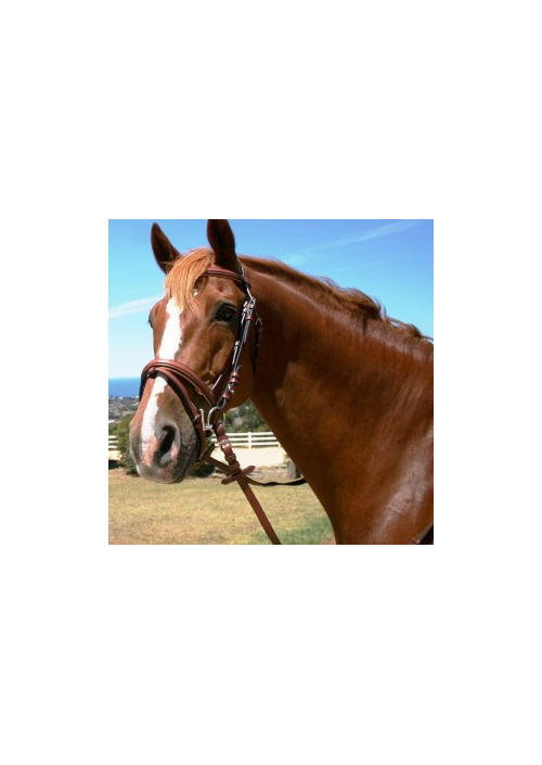 English Snaffle Bridle