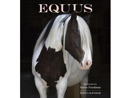 Equus 2022 Wall Calendar by Pomegranate