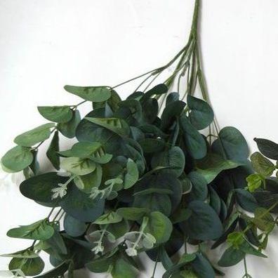 Eucalyptus bunch 1452