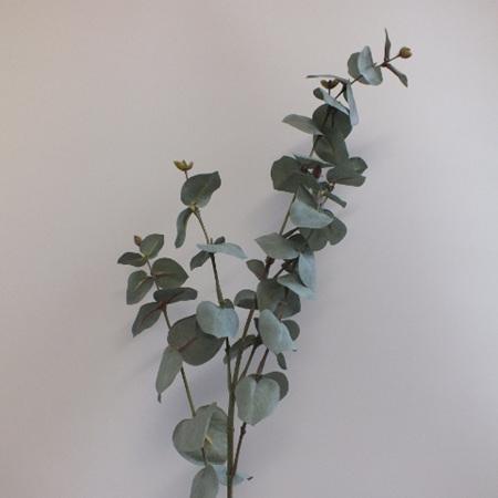 Eucalyptus Stem 1424