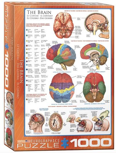 Eurographics 1000 Piece Jigsaw Puzzle: The Brain