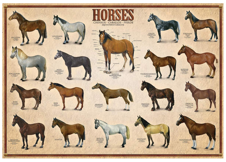 Eurographics 1000 piece puzzle Horses buy  at www.puzzlesnz.co.nz