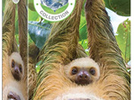 Eurographics 250 Piece Jigsaw Puzzle: Sloth