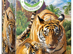 Eurographics 250 Piece Jigsaw Puzzle: Tigers