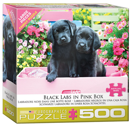 Eurographics 500 Larger  Piece Jigsaw Puzzle: Black Labs In Pink Box