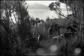 Evening Lightscape, Lake Te Anau