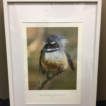 Fantail - Framed Photograph