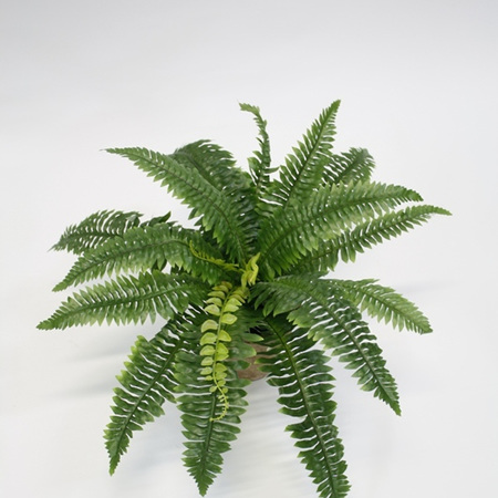 Fern Boston Bush 4060