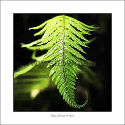 Fern Leaf photo board 19x19cm