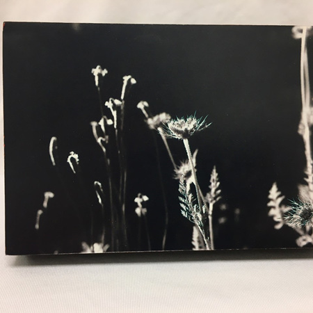 Film Scan on Photo Block - Thistle in Whitby - 6 x 4