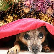 FIREWORKS  ANGEL for pets