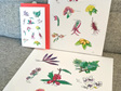 Flora Delights Prints
