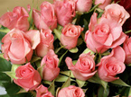 Florists Choice Roses