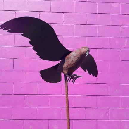 Flying Kaka