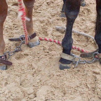 Foal Hobble Set