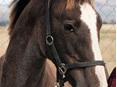 Foal Lead