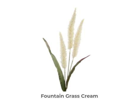 Fountain Grass 94cm Cream