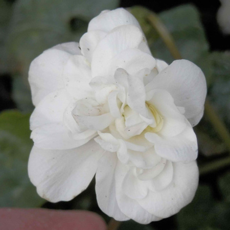 Fragrant & Herb Garden
