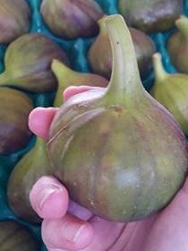 Fresh Spray Free Figs(Brown Turkey Med) - 2 pack