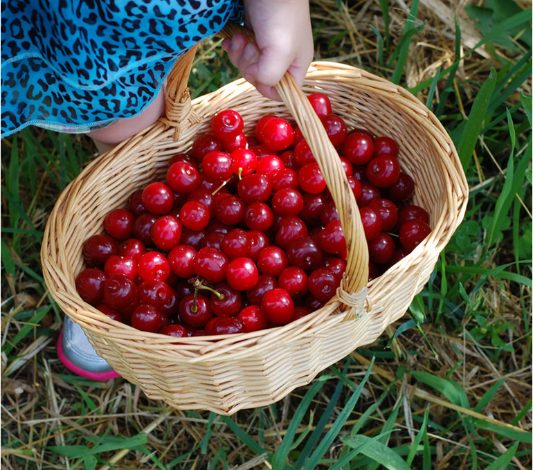 Fresh Tart Cherries