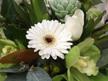 Fresh White, Cream, Green Toned Bouquets/Posies