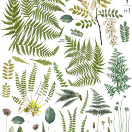 Frond Botanical IOD Decor Transfer