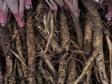 Fruit n Root