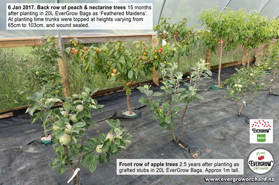 Fruit trees in EverGrow Bags are perfect for small gardens