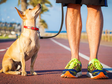 Fun ways to keep fit with your dog