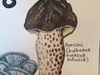 Fungi Prints