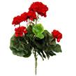 Geranium plant - Red 1434