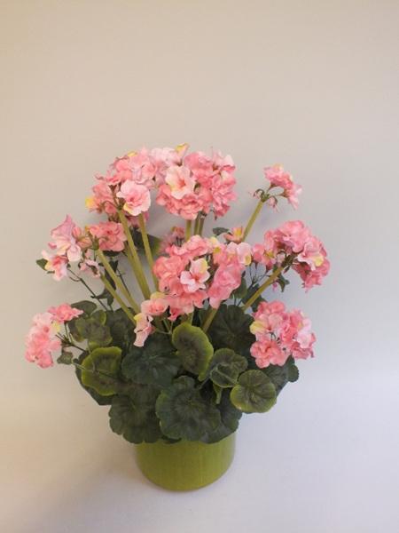 Geranium bush Pink Large 1849