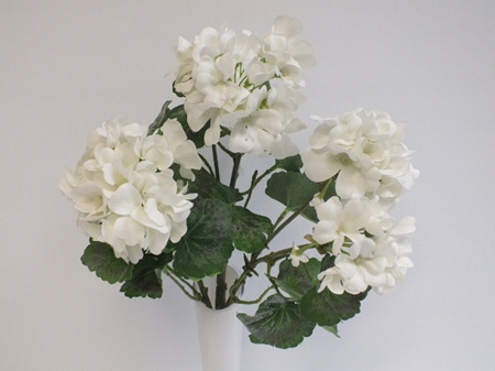 Geranium bush white 4444